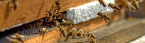 Apiary/Bee garden