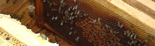 Honeycomb uncapped