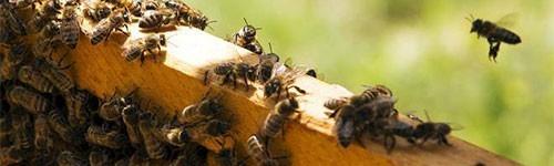 Bee aliment
