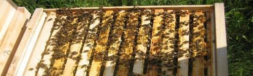 Tratamente si medicamente pentru albine